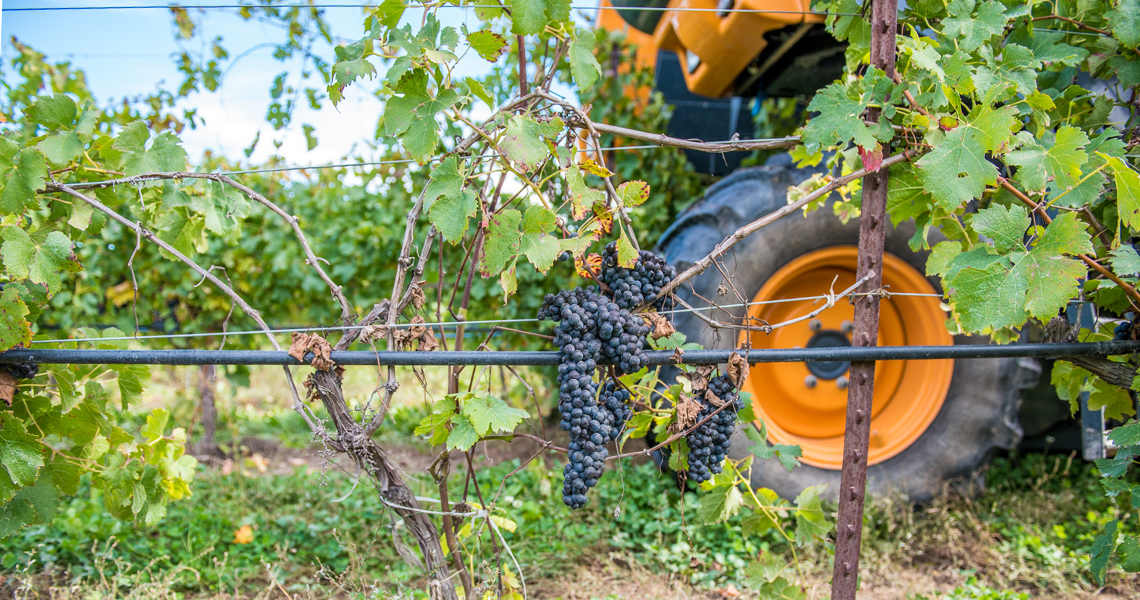 Tractor going through Featherstone Estate Winery vines