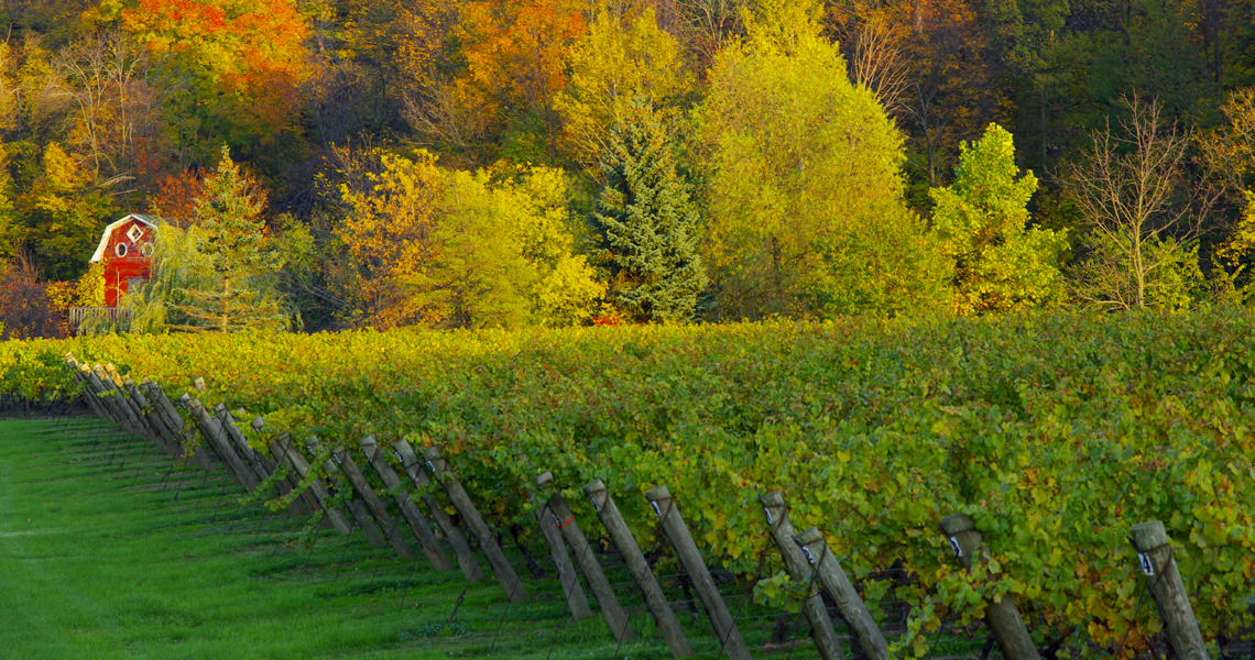 Cave Spring Vineyard and barn